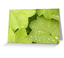 I really needed that drink! Greeting Card