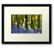 Magical Forest- Bluebells in Hucking Framed Print