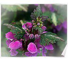 Nettle flower Poster