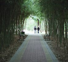 Bamboo alley by Yulia Manko