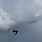 Ocean flyer by katpartridge