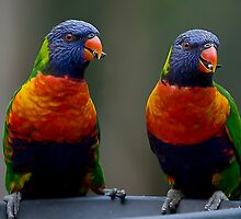 Parrots by GayeLaunder Photography