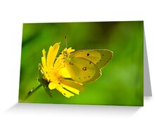 Clouded Sulphur on Lance-leaved Coreopsis Greeting Card
