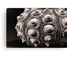 Sea Urchin Detail in Mono Canvas Print