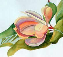 Magnolia 11 by Phyllis Dixon