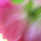 wild roses by Rachael DuMoulin