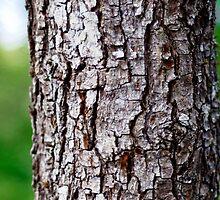 Tree by tutulele
