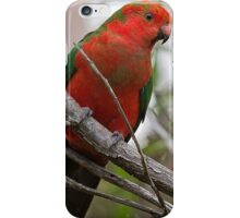 Young King Parrot iPhone Case/Skin