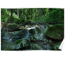 green chaos - forest with a little flow of water Poster