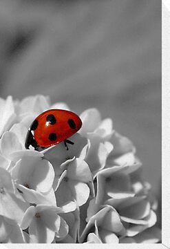 Lady Bug Sc by Martina Fagan