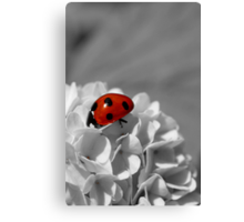 Lady Bug Sc Canvas Print