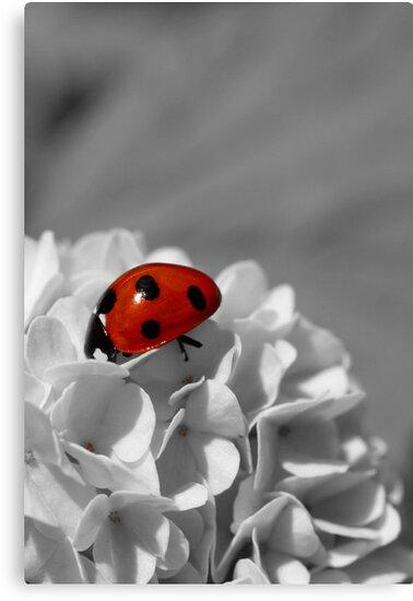 Lady Bug Sc by Martina Fagan