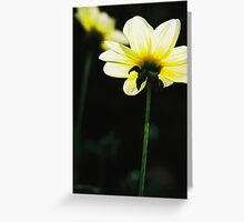 Yellow, Conservatory of Flowers. Golden Gate Park. Greeting Card