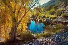 By the Water in Sabino Canyon by Lucinda Walter