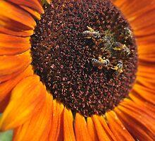 buzzing congregation by Joseph Valcourt
