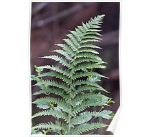 green fern in the forest Poster