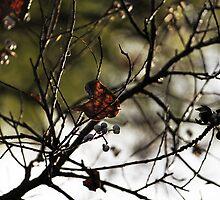 Still Hanging  -Winter Series- by Evita