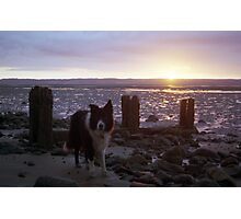 Sunset beach with Indy Photographic Print