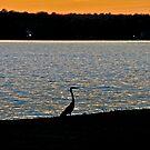 Blue Heron Sunset by campbellart