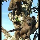 Infant Baboons Playing #2 by korinna999