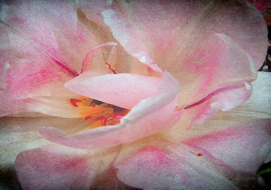 Wild Rose © by Dawn M. Becker