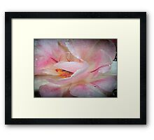 Wild Rose © Framed Print