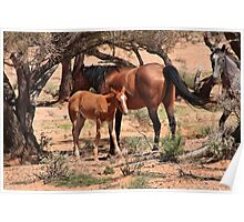 Mother and foal. Outback, Australia Poster