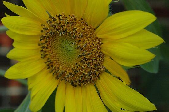 Seeding by Wviolet28