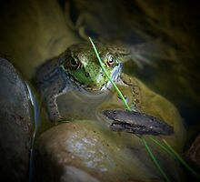 """ Ribbit.....Ribitt - Beaver Lake "" by DeucePhotog"