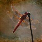 Dragonfly ~ Pay attention to you deeper thoughts and desires by Myillusions