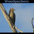 Woodpeckers by Kimberly Chadwick