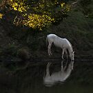 There Was a White Horse ... by Barbara Burkhardt