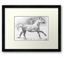 Dapple Grey Horse Framed Print