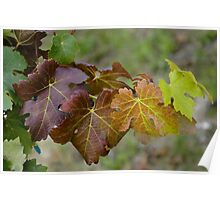 Vine leaves nuance Poster