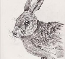 Jack Rabbit by cdgarciamejia