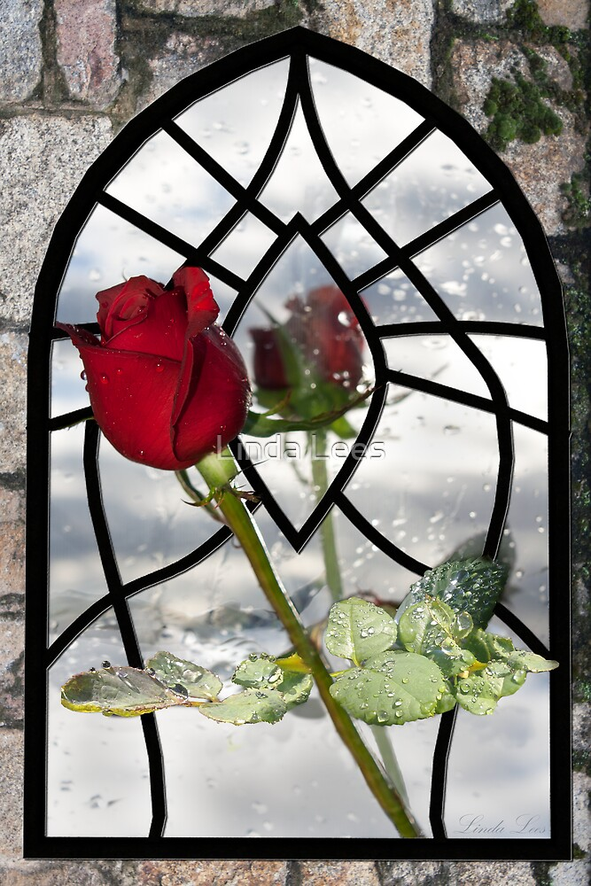 The Timeless Beauty of a Red Rose by Linda Lees