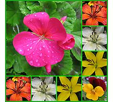 Raindrops On Petals Collage Photographic Print