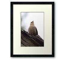 Brown Treecreeper Framed Print
