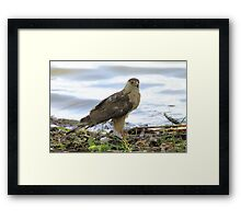 """Survival! 2"" Framed Print"