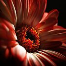 A Floral Red Head by Aj Finan