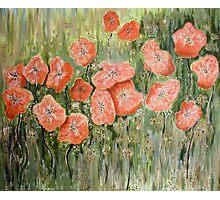 Wild Poppies Photographic Print