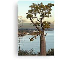 Boab Tree Sunset King's Park. Canvas Print