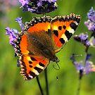 Vlinder by Hetty Mellink