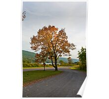Golden Tree in Fall Poster