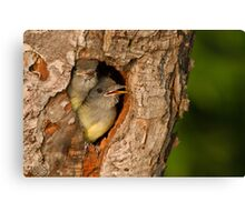 Baby Great Crested Flycatchers make a cameo appearance. Canvas Print