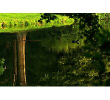 Coot's upside down water world Photographic Print
