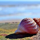 Seashell by Bel Menpes