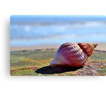 Seashell Canvas Print