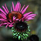 Cone Flower in the Shade by William Martin
