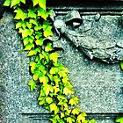 Ivy on gravestone by Jason Feather